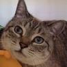 被災地からきた美猫