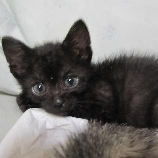ごろすりの人なつこい黒猫びびんば君 動画有り