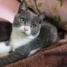 ☆甘えん坊の短足な子猫ちゃん☆