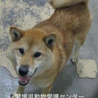 愛媛県動物愛護センターに収容されています!!!