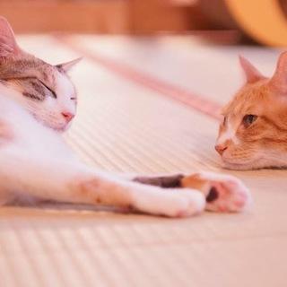 美しいタマちゃん、性格ハナマルの三毛猫のビタマ
