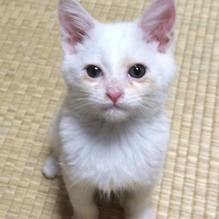 【白猫】 鳴門(仮名)