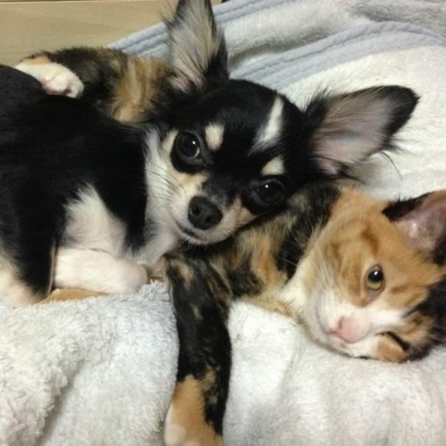 犬猫を守る会 天使のおうちのカバー写真