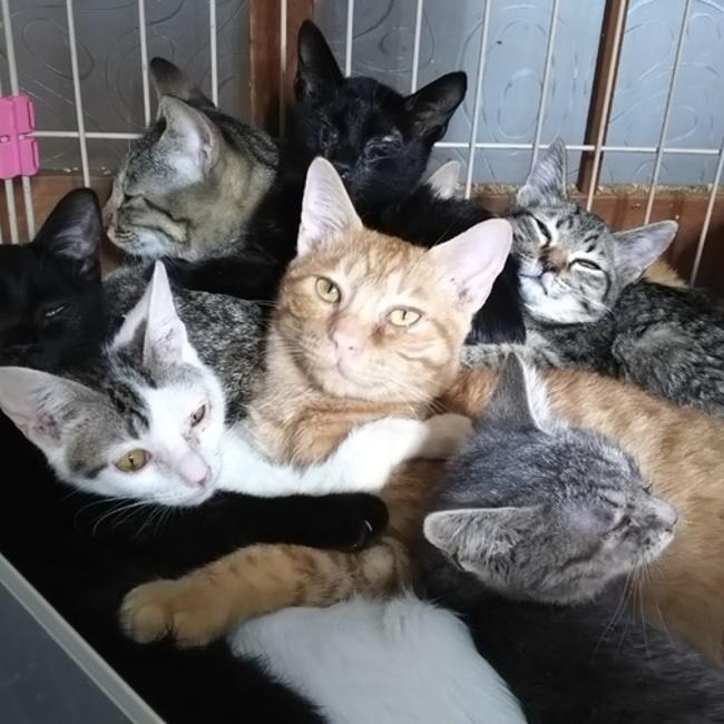 子猫の保育園のカバー写真