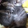 子猫の保育園