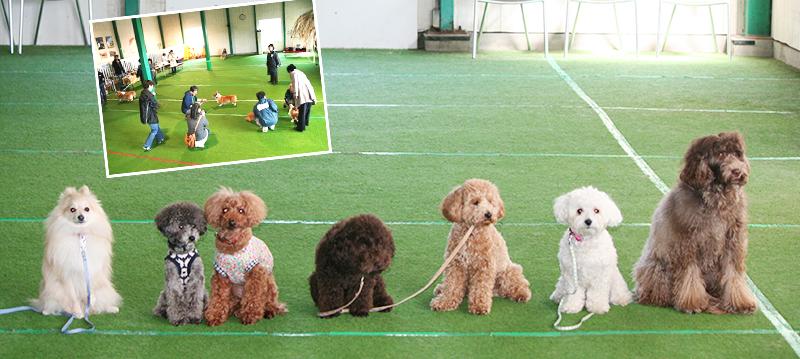 Dog space Punahele サムネイル1
