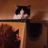 心優しい保母猫⭐︎つぶちゃん⭐︎ サムネイル5