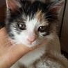 緊急募集!! ふわふわ長毛の兄弟猫です。