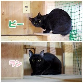 虐待現場からレスキューした黒猫2匹一緒のご縁を!
