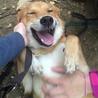 猫OK★人が大好き!甘えっ子、いつも笑顔の犬