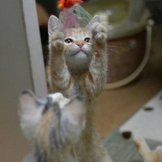 福島っ子子猫たち