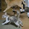 福島っ子子猫たち サムネイル2