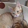 福島っ子子猫たち サムネイル3