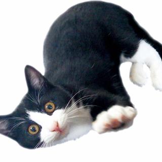 3ヶ月仔猫(人年齢で5~6歳)家族になってください