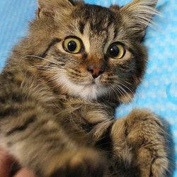 12月5日「猫の譲渡会」・愛知県みよし市
