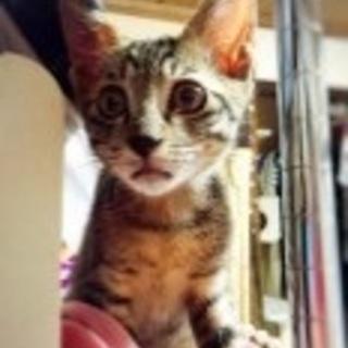 シャムミックス?本来の猫の姿が見られます。