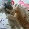 ひとりぼっちで鳴いてた子猫 サムネイル7