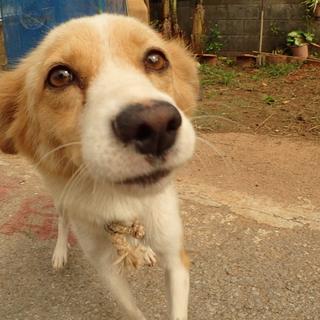 ゴミ捨て場に捨てられている犬 家族探しています