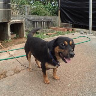 MIX ゴミ捨て場の放棄犬 家族募集