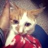 子猫の城ちゃん サムネイル2