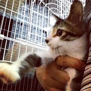 子猫の粕谷
