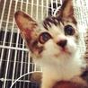 子猫の粕谷 サムネイル2
