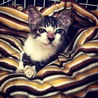 子猫の粕谷 サムネイル3
