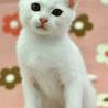 元気いっぱい! 白猫のマシロくん☆