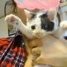 【子猫】なつっこーいむっくん♂