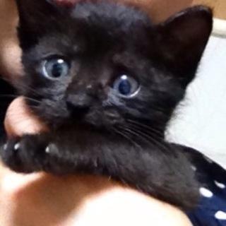ちっちゃい黒い子猫!