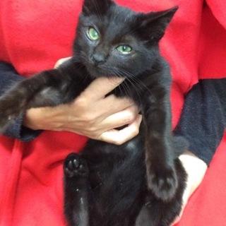 幸福を呼ぶ黒猫くん♪