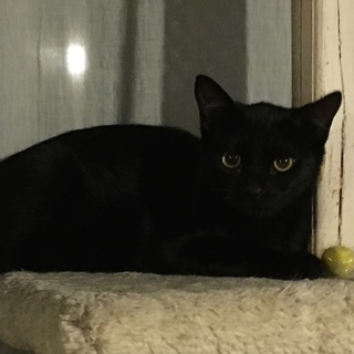 黒猫・目が金色・イカ耳すら可愛い女の子♪