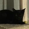 黒猫・目が金色・イカ耳すら可愛い女の子♪ サムネイル2