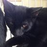 黒猫・目が金色・イカ耳すら可愛い女の子♪ サムネイル4