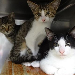 茨城センターから保護しました仔猫7匹です!