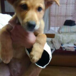 川に落ちた3か月半の子犬