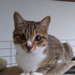 みんにゃの家 定例猫の譲渡会 at きまぐれ堂