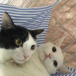 第53回リトルパウエイド猫の譲渡会