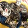 6匹の子猫の里親さん募集中です!