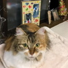 ふさふさシッポの三毛猫さん サムネイル6