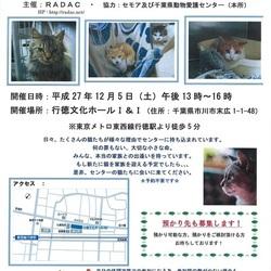 動物愛護センターの猫の里親会 IN 行徳 (RADAC主催)