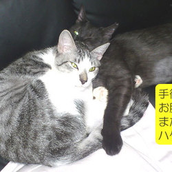 第12回 定例譲渡会 「猫の里親譲渡会」