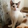 可愛いメス猫の里親さん募集中。