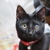 お茶目な黒猫ペッパー里親さん決定
