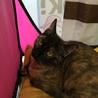 さびちゃん子猫のしずく♥女の子 5か月手術済 サムネイル2