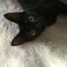 黒ちゃん子猫♥えりちゃん♥8か月女の子 サムネイル2