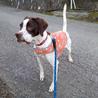保護犬ベティちゃん里親決定 サムネイル5