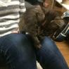 生後3ヶ月のふわふわ中毛子猫の里親さん募集してます