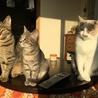 キリッ!と正統派美猫 にこちゃん  サムネイル7