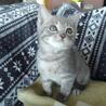 キリッ!と正統派美猫 にこちゃん  サムネイル2